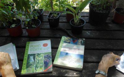 Le soin des plantes par les plantes : purin & infusion