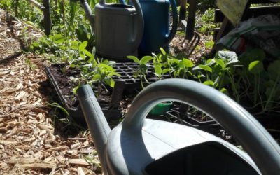 Participer à la cagnotte pour la nouvelle irrigation du jardin partagé de Lodève !