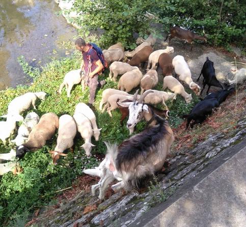 soulondre chevre mouton